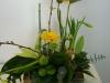 billeder-bil-blomster-214